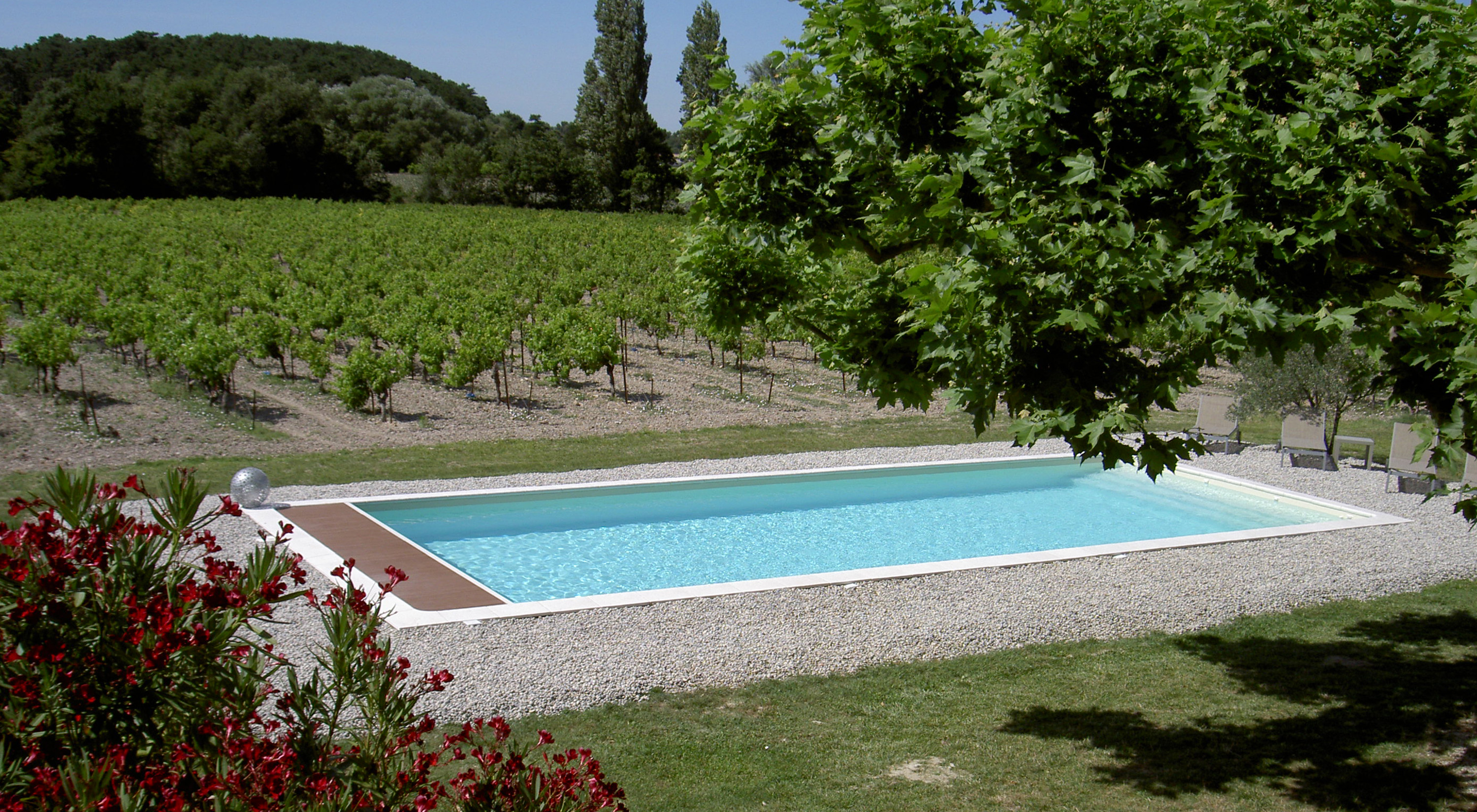 Swimming pool in the middle of the vineyard