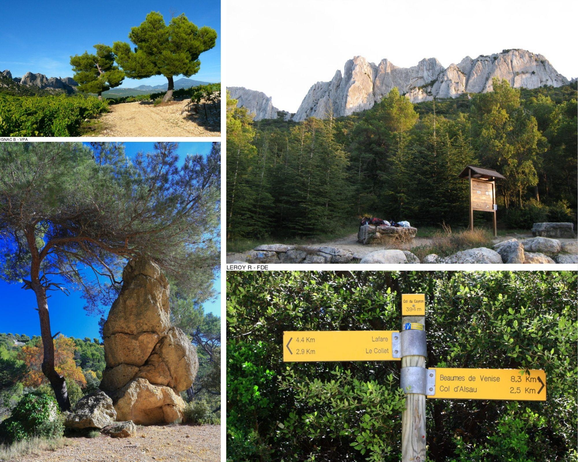 hiking path in les Dentelles de Montmirail