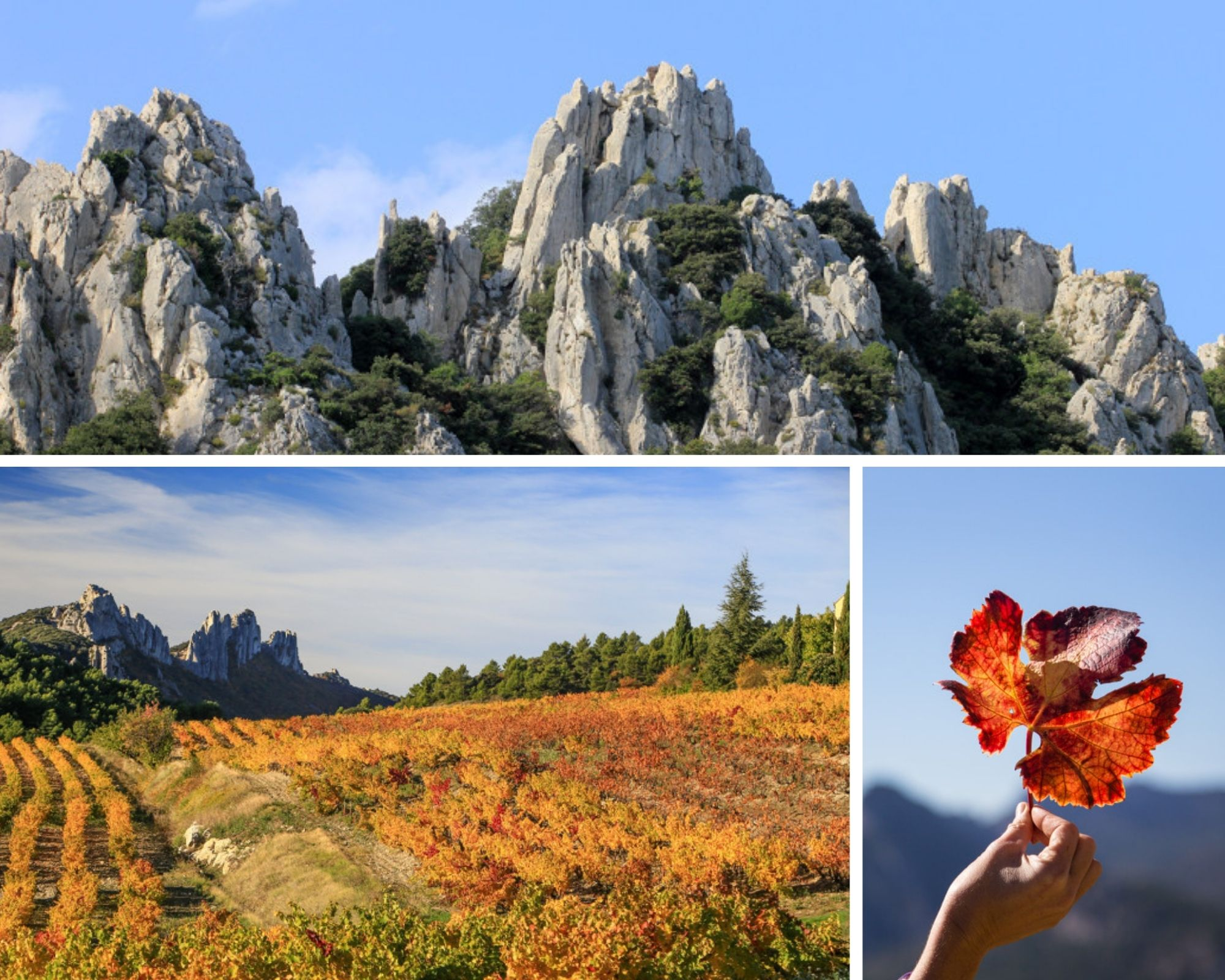 Discovering the Dentelles of Montmirail