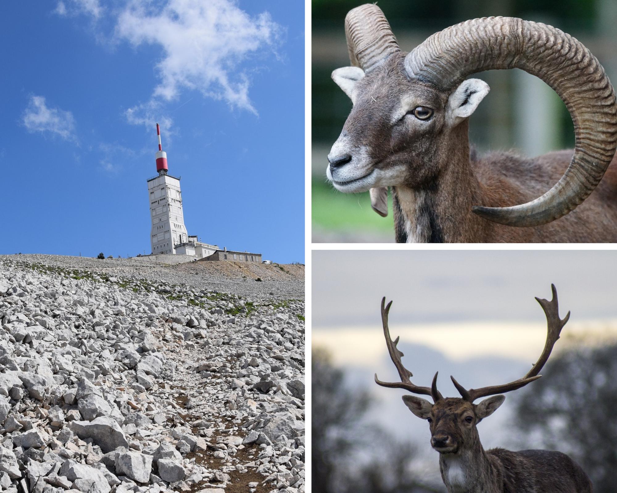 hiking in Mont Ventoux, animals watching
