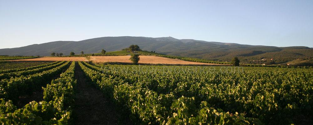 Mont Ventoux vignes