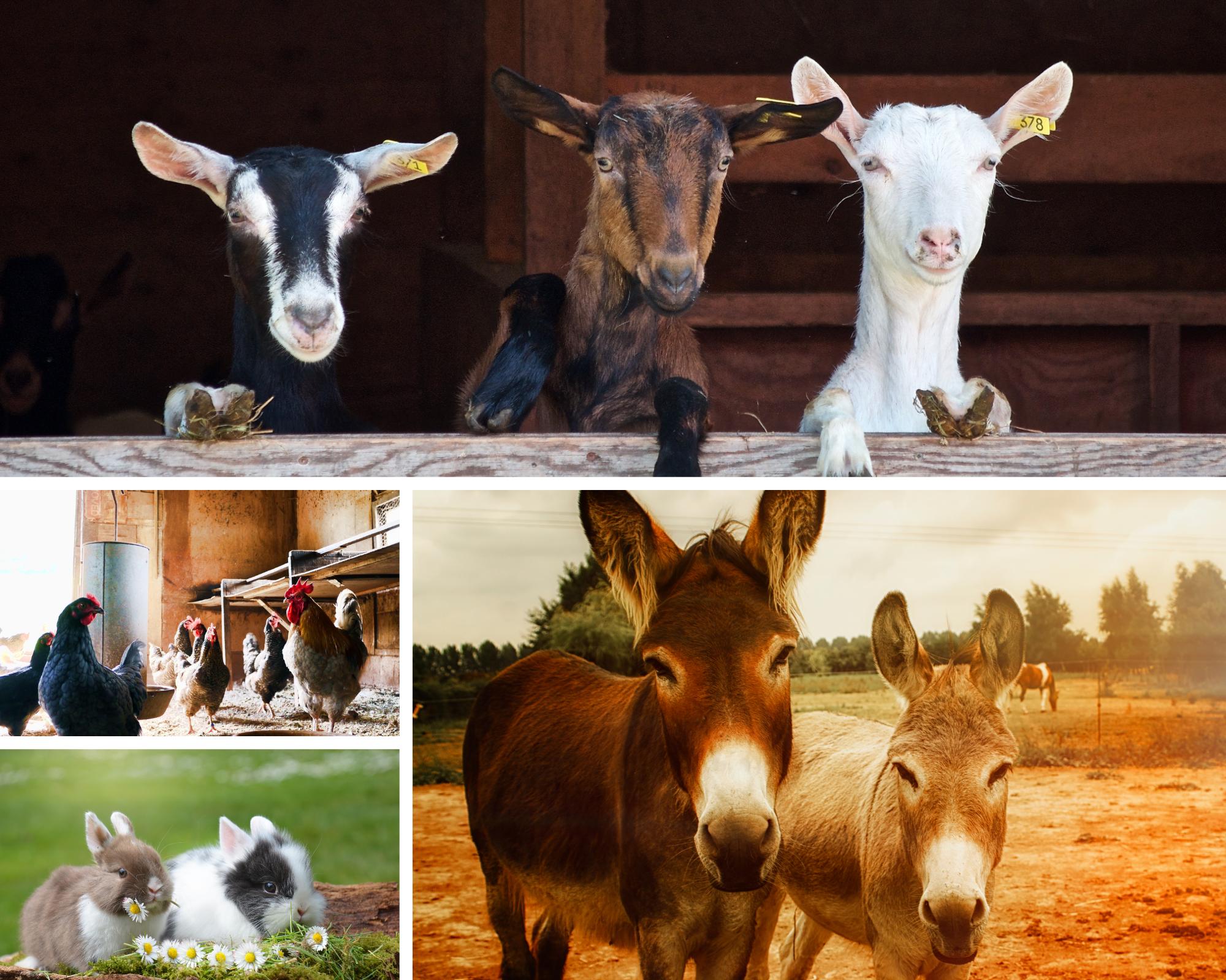 Visit a pet friendly farm near Mont Ventoux