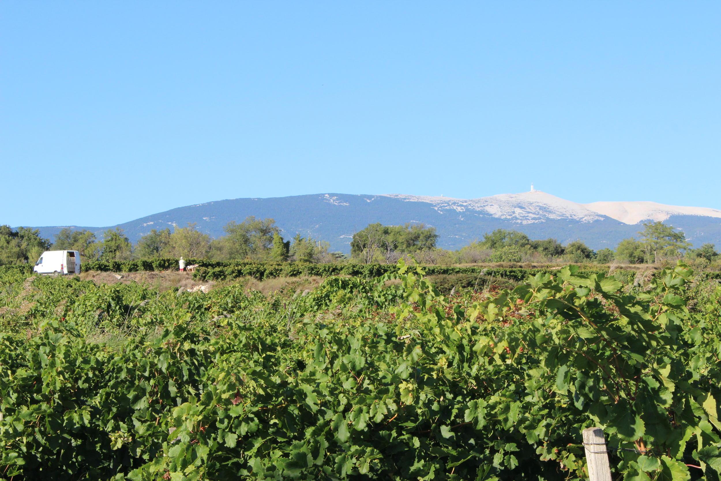 Sarrians dans le Vaucluse, près de Carpentras