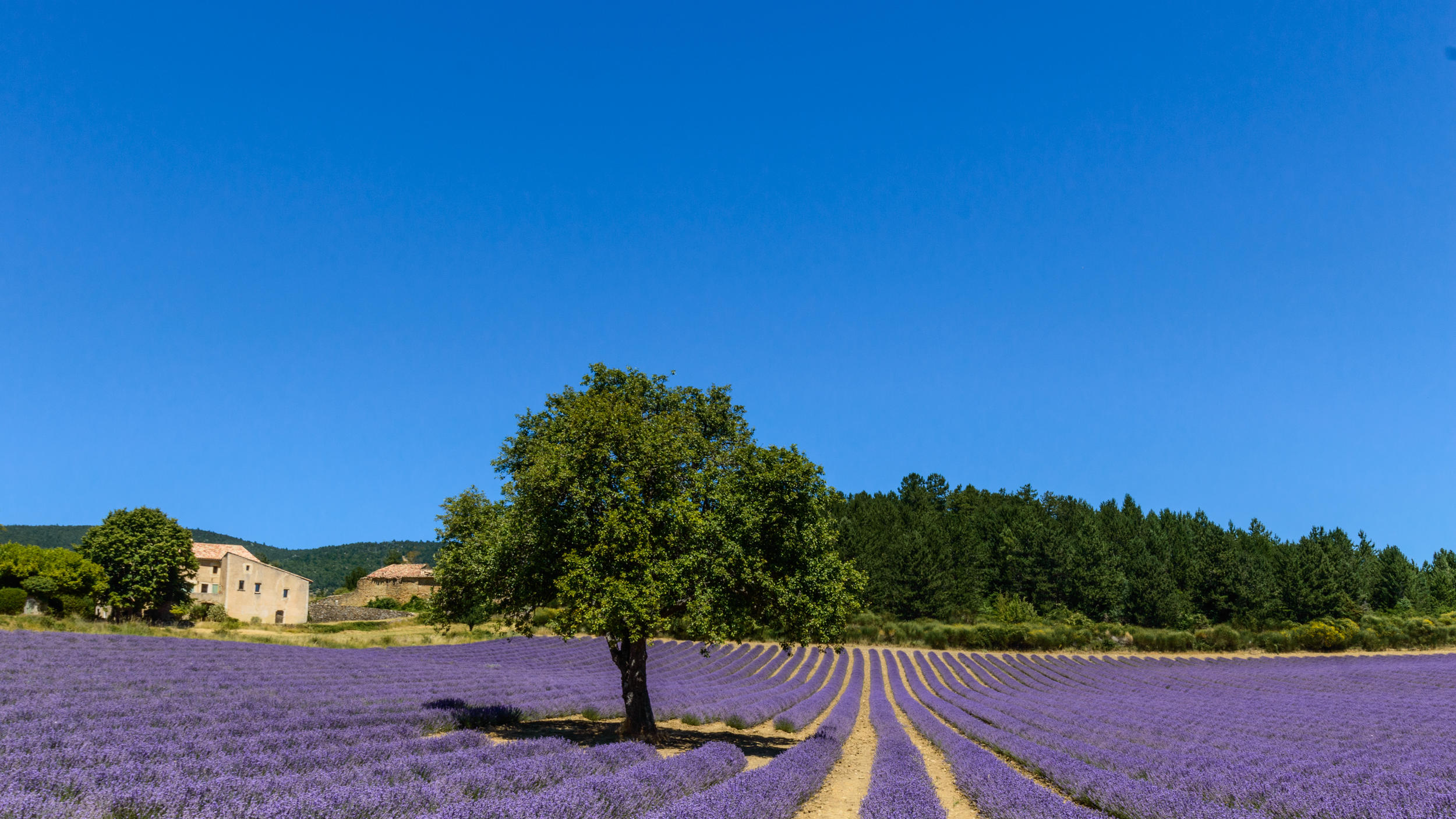 In lavender country